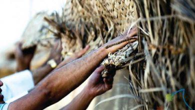 صورة مهرجان «الدوخلة» يستعيد «فرجان أول»