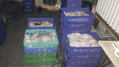 صورة احباط توزيع 450 دجاجة فاسدة على مطاعم بسيهات