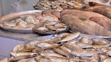 صورة قطيف السعودية نافذة اشهر انواع الاسماك
