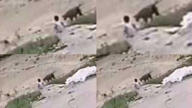 صورة حادثة طفل الهفوف تثير تخوف الأهالي مع مطالبة بوضع حلول