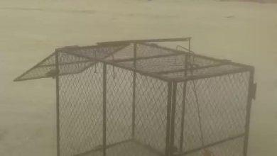 صورة الدهان: سيتم توفير مصائد الكلاب الضالة في كافة محافظة القطيف