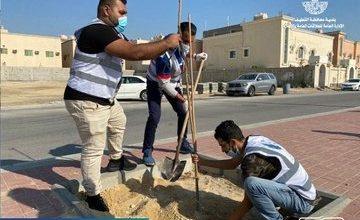 صورة سيهات.. شارع طارق بن زياد يتزين بـ 100 شجرة