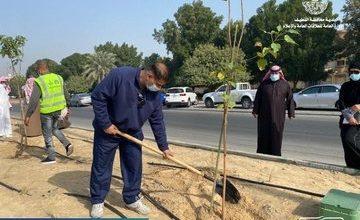 صورة «سيهات» 90  متطوع ومتطوعة يشاركون في زراعة  1700 شجرة بشارع الملك عبد العزيز