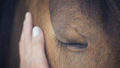 صورة عُمق الناب.. وسلوك الافتراس أدلة… كيف يكشف الطب الشرعي نفوق الحيوانات