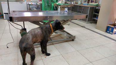 صورة بالصور.. إحراق 21 كلباً حيّاً في سيهات