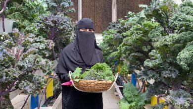 صورة التمريض يقود «مريم العليو» لامتهان «زراعة الكيل»